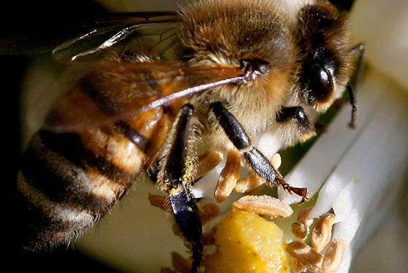 Según confiesa el doctor Juan, cuando ve una abeja lo primero que...