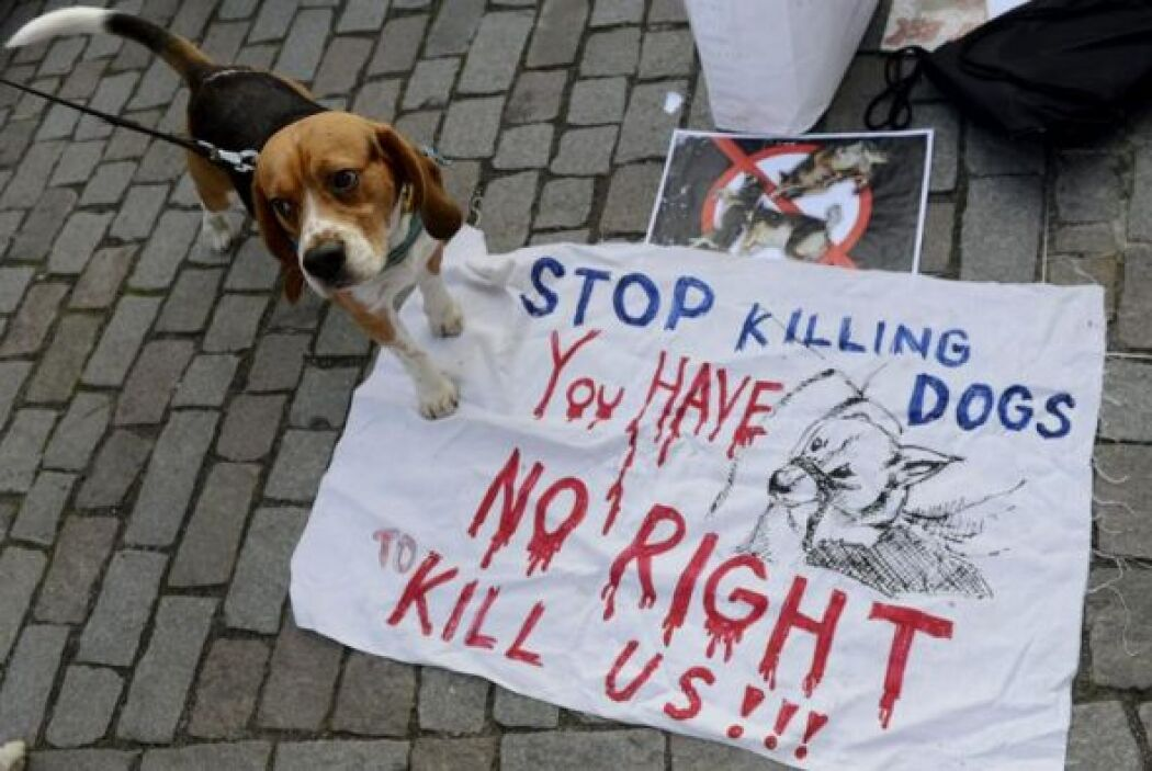 Un perro es colocado junto a un cartel en protesta por la recién aprobad...
