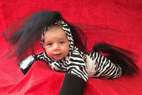 Una zebra adorable.