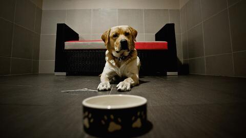 Las ventajas de regalarle a tus seres queridos una mascota adoptada