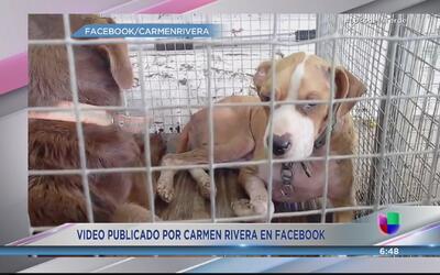 Denuncian maltrato de animales en el Municipio de Adjuntas