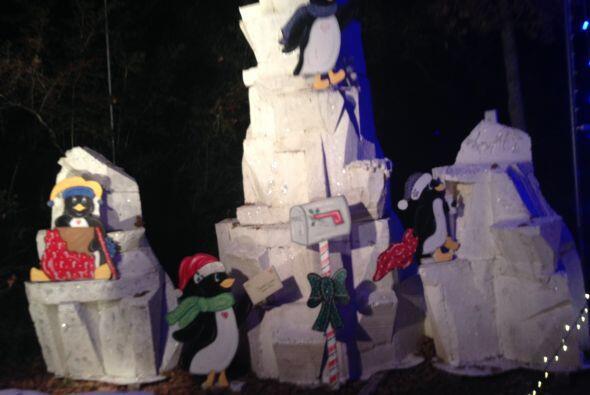 Después de eso, encontramos pingüinos  en pleno apogeo en el Polo Norte.