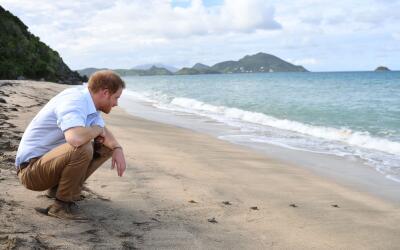 El príncipe Harry con tortuguitas durante su visita a Isla Nieves.