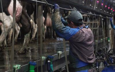Fear of deportation grows in the dairy industry in Wisconsin