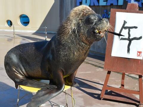 Jay es un león marino que pinta un caracter chino para practicar...