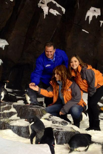 'Antarctica: Empire of the Penguin' es la nueva atracción de SeaWorld en...