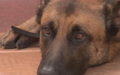 Vecinos de padre de colombiano asesinado piden que saque a sus perros de...