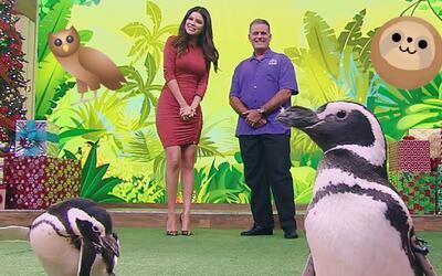 Pingüinos, perezosos y búhos: Nuestros invitados especiales del reino an...