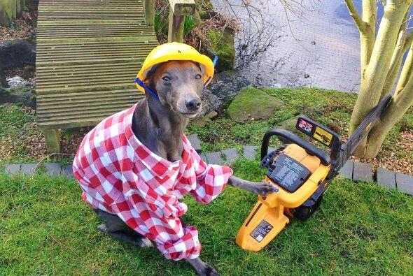 Un gran constructor.
