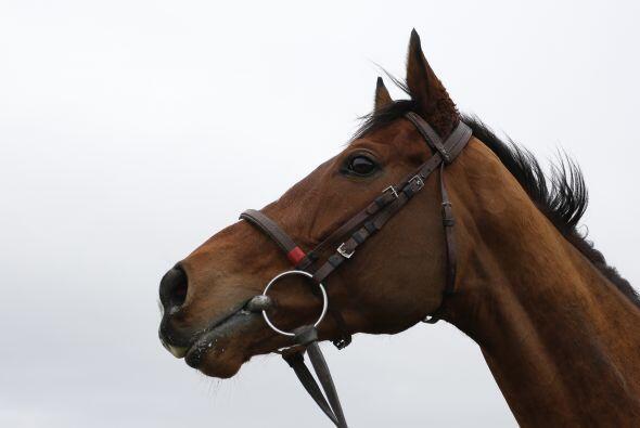 Los caballos aprenden por señas: de esta manera se comunican entre ellos...