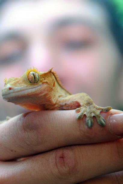 Sabe que antes de morder, los reptiles lanzan señales de desconte...