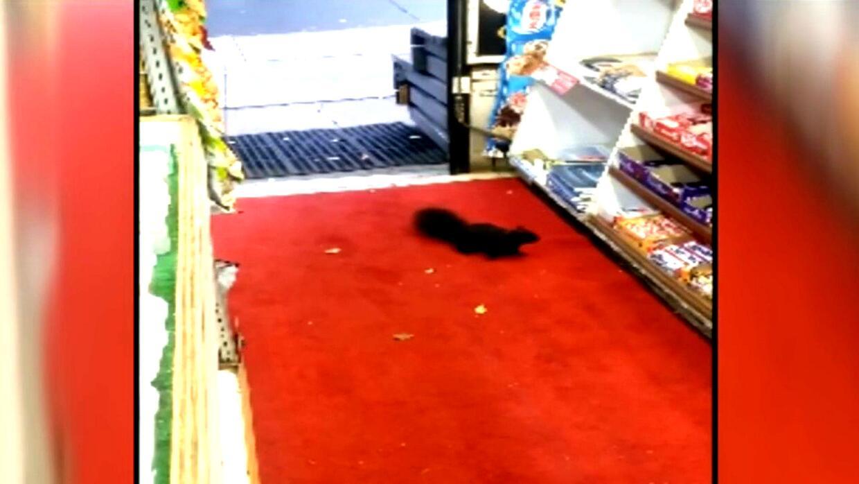 El dueño de una tienda en Toronto descubre a delincuentes que le robaban...