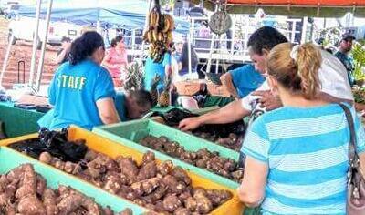 Festival de la Yautía Amarilla en Arecibo