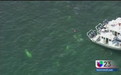 Encuentran cuerpo de piloto que se estrelló cerca de Elliot Key