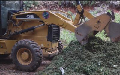 Autoridades de Calaveras arrestaron a 23 personas quienes plantaban mari...