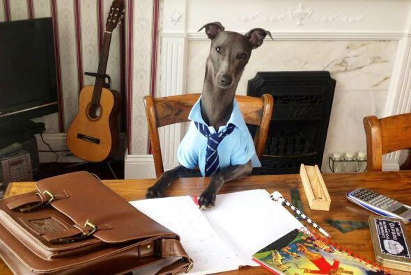 Alguien pidió un profesor canino.