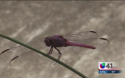 Lanzan alerta para evitar propagación de mosquitos en época de lluvias