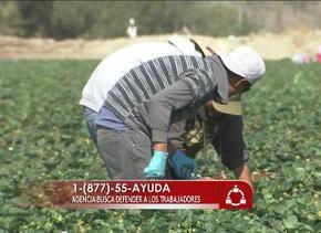 Defenderán a trabajadores abusados