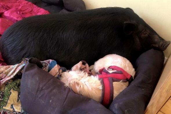 Siempre puedes encontrar a Fella cerca de las otras mascotas de esta par...