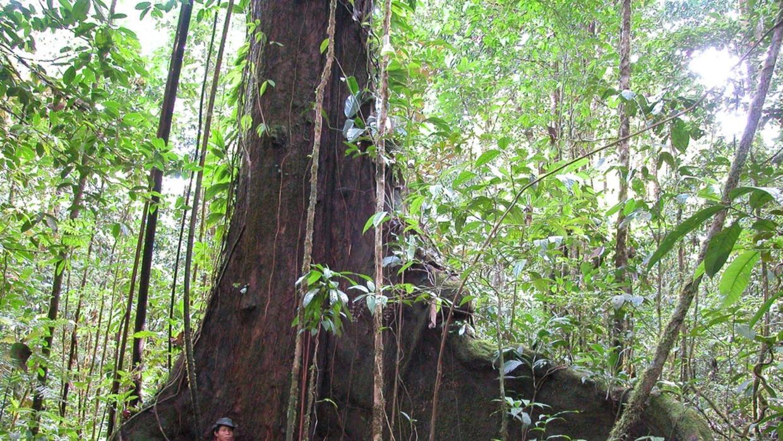 Selva Amazónica 2