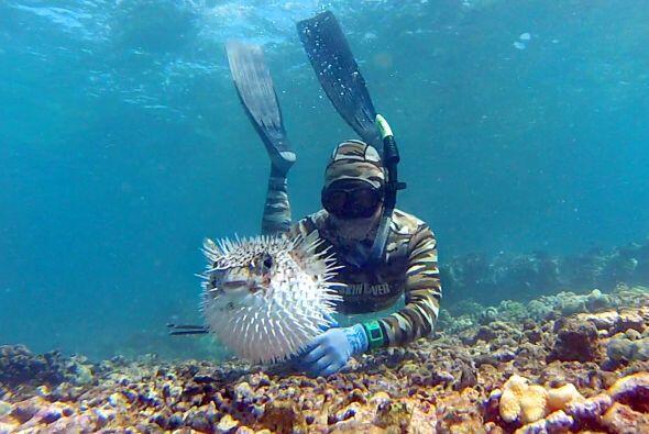 Otro que sin duda quería ser el protagonista de esta toma, fue este pez...