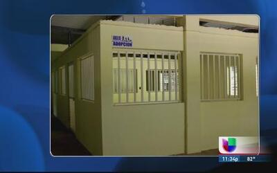 Abren nuevo albergue de animales en Arecibo