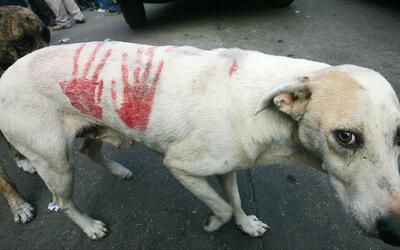 Las mascotas también sufren los efectos de la violencia y la escasez de...