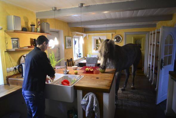 ¿Y dónde come el caballo? No lo hace en un comedero conven...