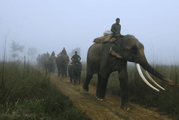 Tiger Tops, en Nepal, sigue siendo la sede de polo de elefantes y el sit...