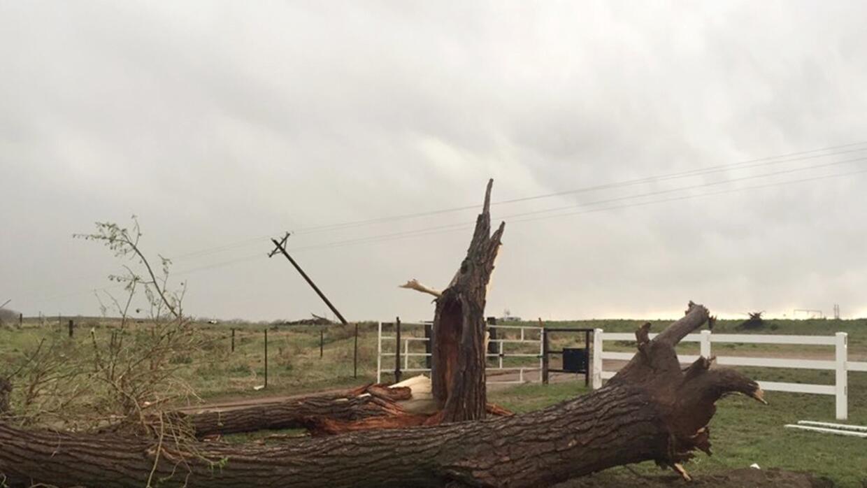 Un árbol caído en Colorado este sábado