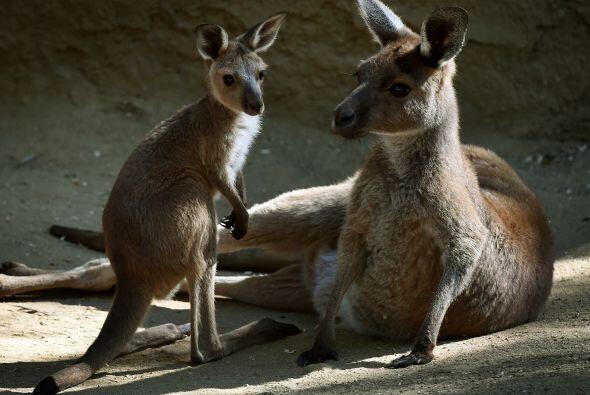 Las crías de estos mamíferos están viendo por primera vez el sol.