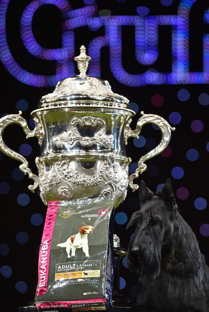 La copa aguardaba para el ganador de la categoría 'Best in Show'.