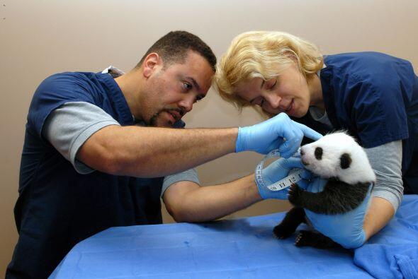 En tanto, el nombre finalmente seleccionado lo propuso Amigos del Zoo Na...