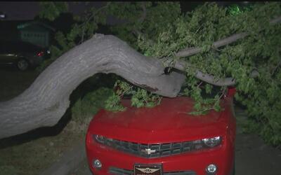 Residentes en Gardena no saben cuándo van a retirar un árbol que se cayó...