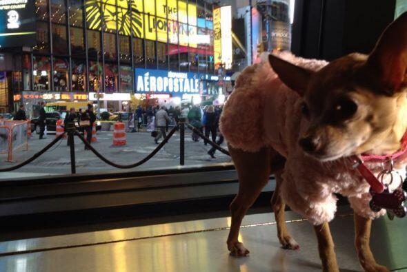 Honey Berry está en Nueva York lista para triunfar en Good Mornin...
