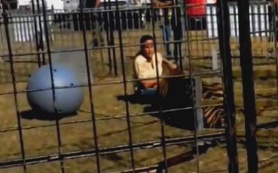 Enorme tigre arrastra con furia salvaje a su entrenadora durante un espe...