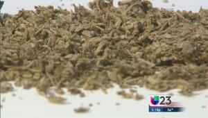 Droga K2 causa estragos en Dallas