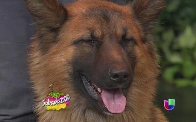 Mujer arriesga su vida para salvar a un perro de la calle