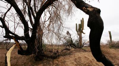 Desierto de AZ