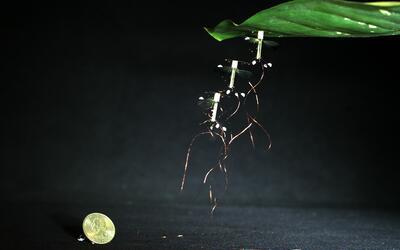 Este es el robot insecto diseñado por ingenieros de Harvard
