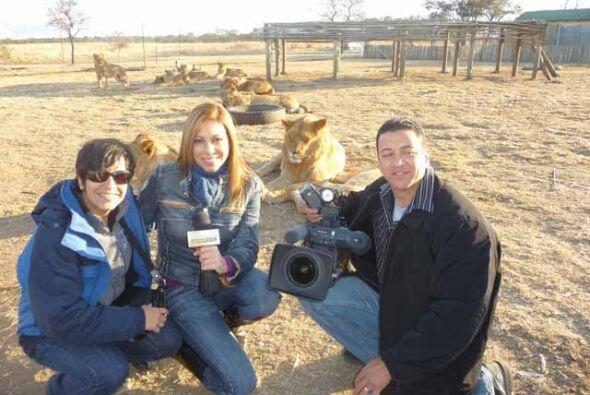 Amelia convivió con leones, vio búfalos y se adentró en la cultura afric...