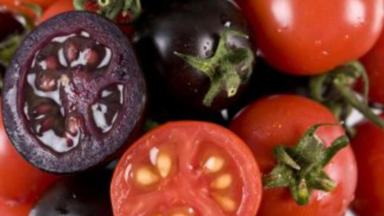 Estudios indican que los tomates morados con altos niveles de antocianin...