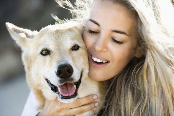 Siguiendo estos consejos tu perro y tu sobrevivirán al calor del...