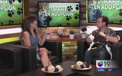 Salve la vida de un perro o un gato y adopte una mascota