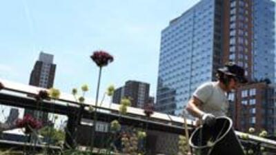 Inmigrantes han mantenido más sus empleos en N. York que los nacidos en...