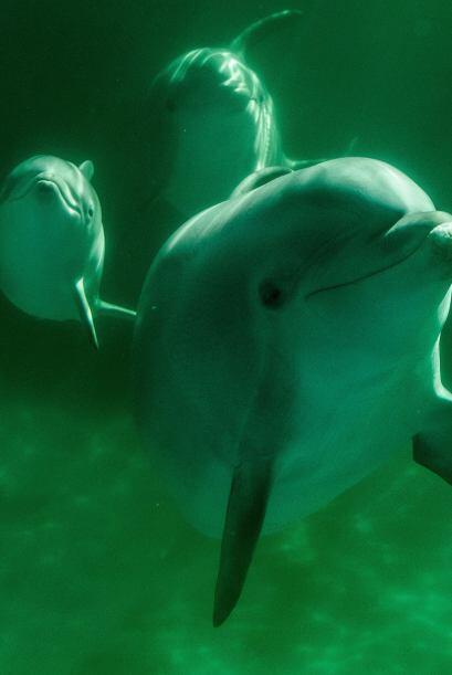 No podía faltar el delfín, el animal más inteligente de todos. ¡En Brasi...