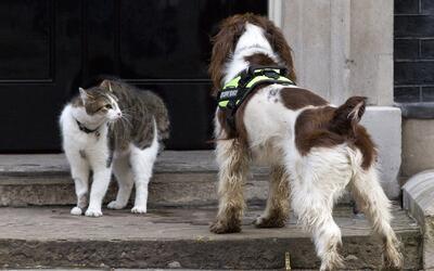 ¿Está pensando en adoptar una mascota? Esta oportunidad le podría interesar