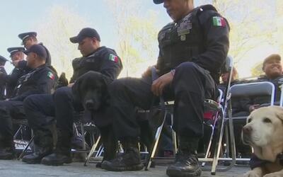 Con una merecida ceremonia le dan de baja a nueve perros policías tras c...