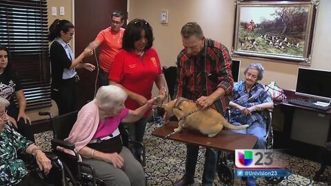 Adultos mayores reciben terapia con gatos