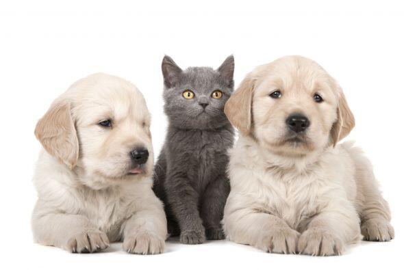 Entonces, esta lista es para ti. Descubre algunas de las razas de perros...